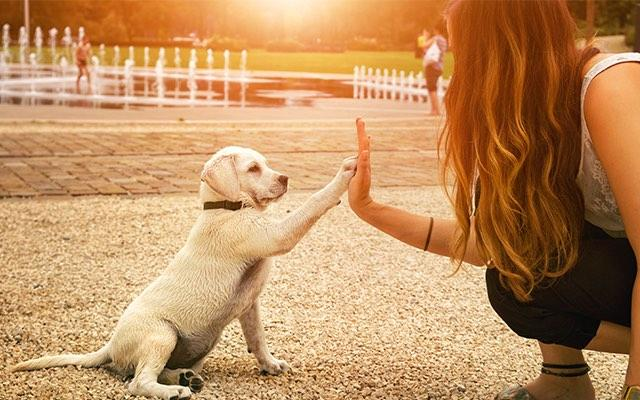 Photo of a woman giving a white puppy a high five