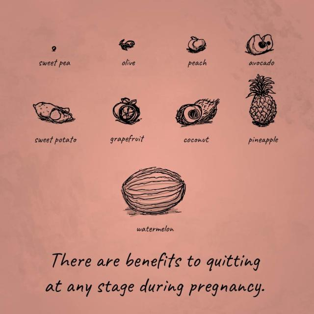 "Illustration of fruits/vegetables simulating fetus size with text saying ""There are benefits to quitting at any stage during pregnancy."""